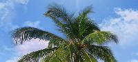 Relax Декор Пальма (верх) (RX2G133DA) – 44x20